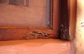 วิธีให้บ้านเราปลอดปลวก